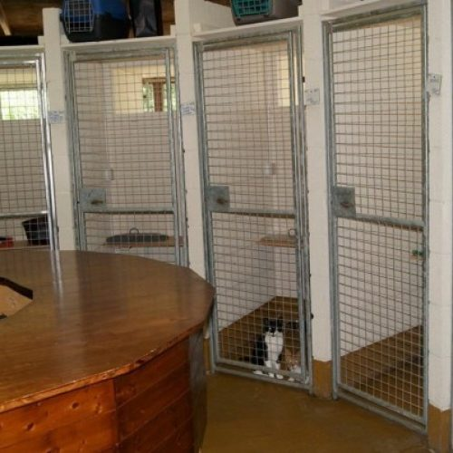 Cattery-1-600x402